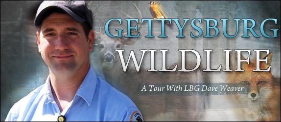 Gettysburg Wildlife